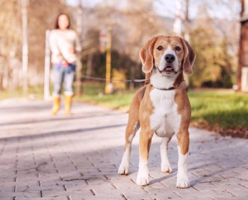 ladridos-de-perros